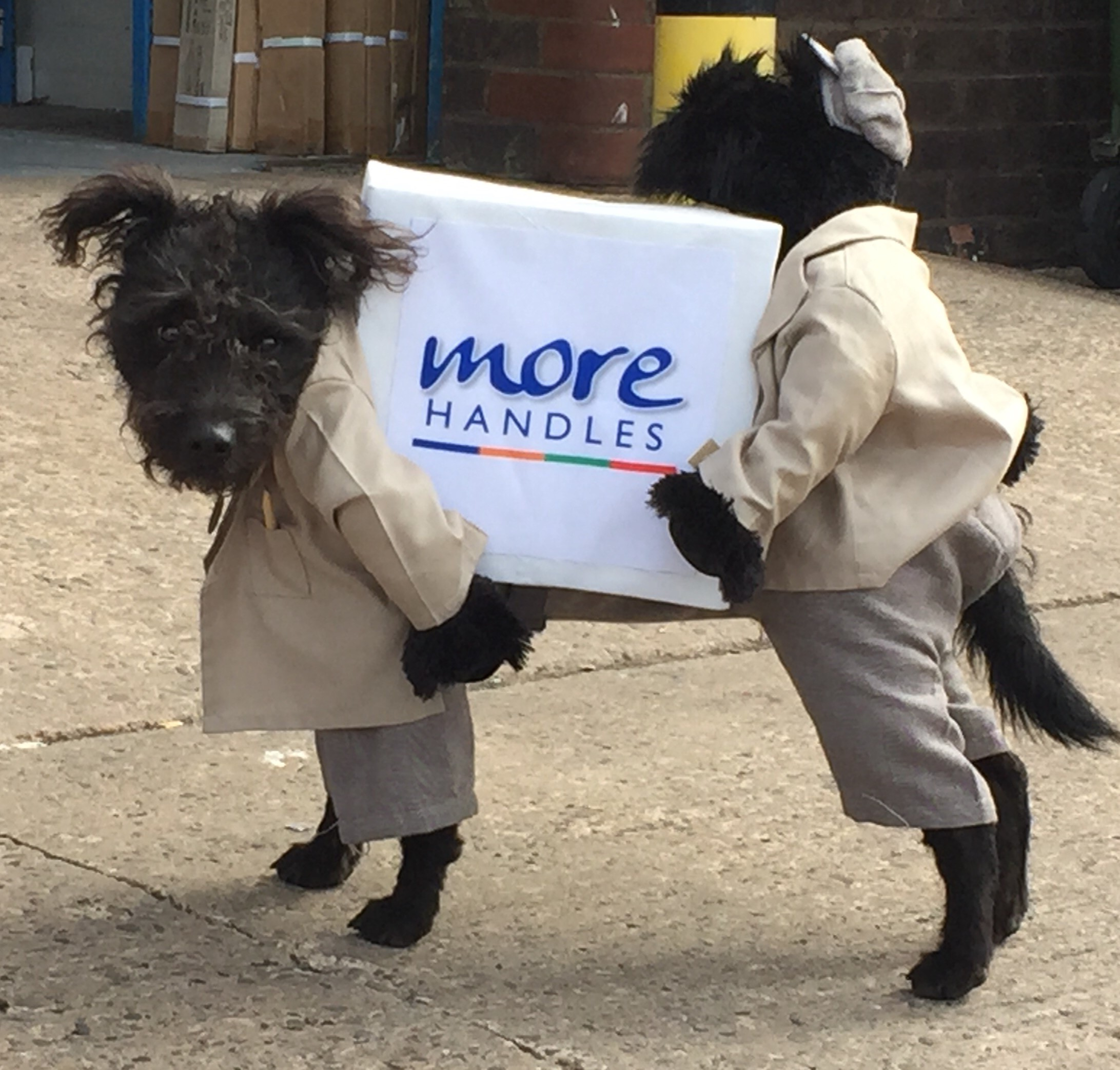 funny dog delivery suit
