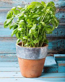hide spare keys under plant pot